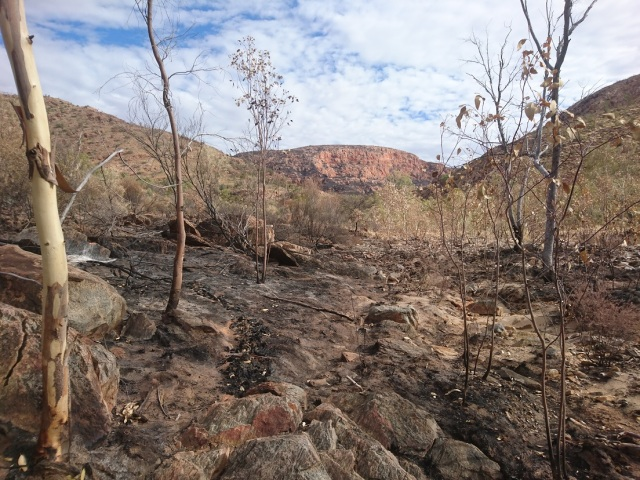Hugh gorge after the fire.jpg