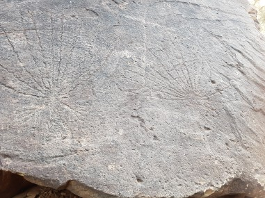 Petroglyphs at N'Dhala Gorge